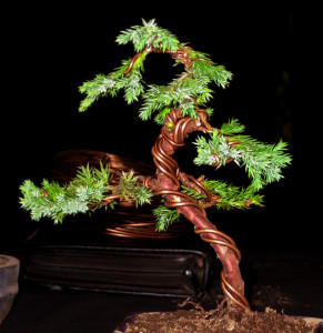 grow a bonsai the best guide to grow your own bonsai rh growabonsai com Bonsai Styles Bonsai Shapes