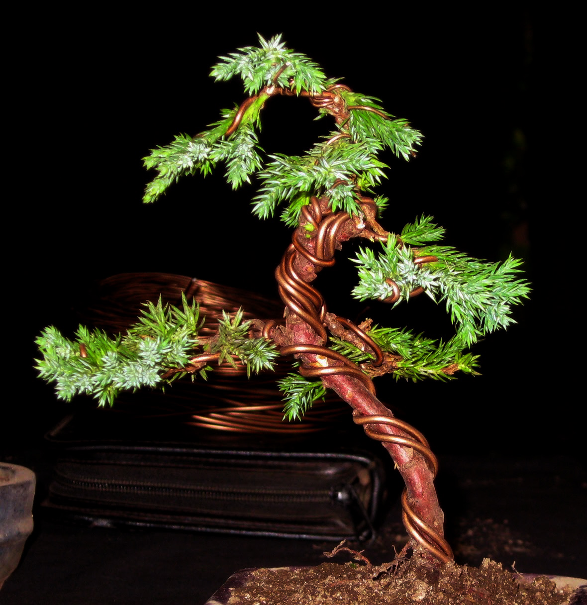 Wiring Bonsai Video Quick Start Guide Of Diagram Techniques Grow A The Best Guides To Your Own Homemade Silhouette