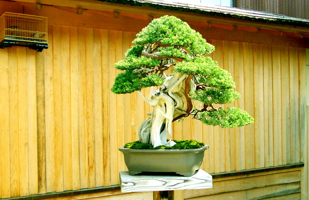 grow a bonsai