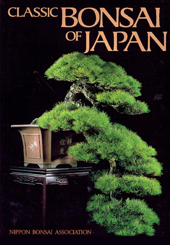 bonsai pictures