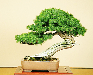 Indoor Bonsai Recommendations Tips And Guides Grow A Bonsai